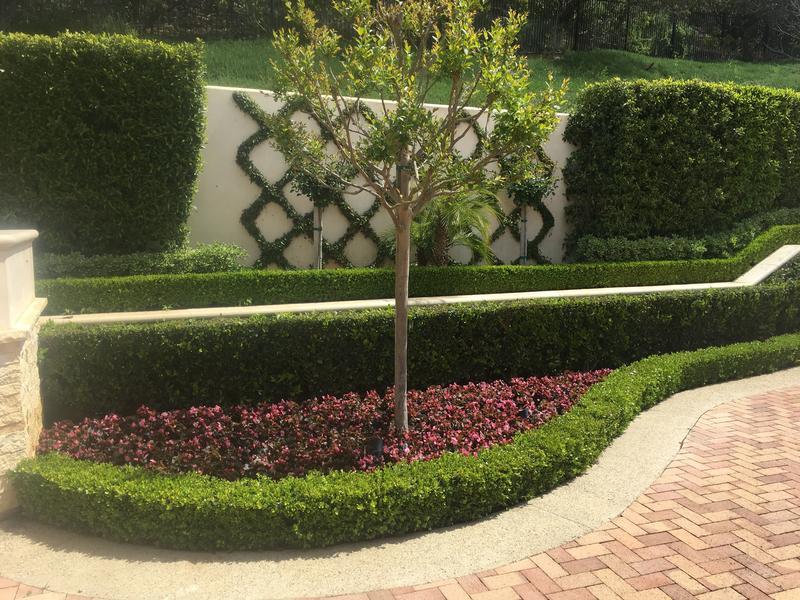 Landscape Maintenance In Beverly Hills Brentwood Beyond