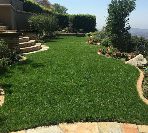 Professional landscape maintenance