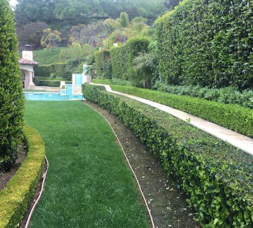Beverly Hills lawn maintenance